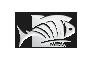 Fish IT Media - Sponsor der Burghausen Crusaders